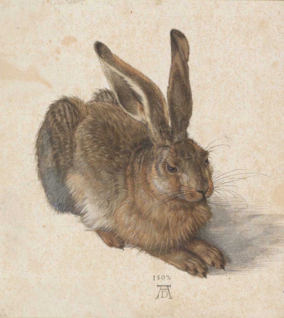 Een jonge haas (Albrecht Dürer, 1502. Foto: Albertina)